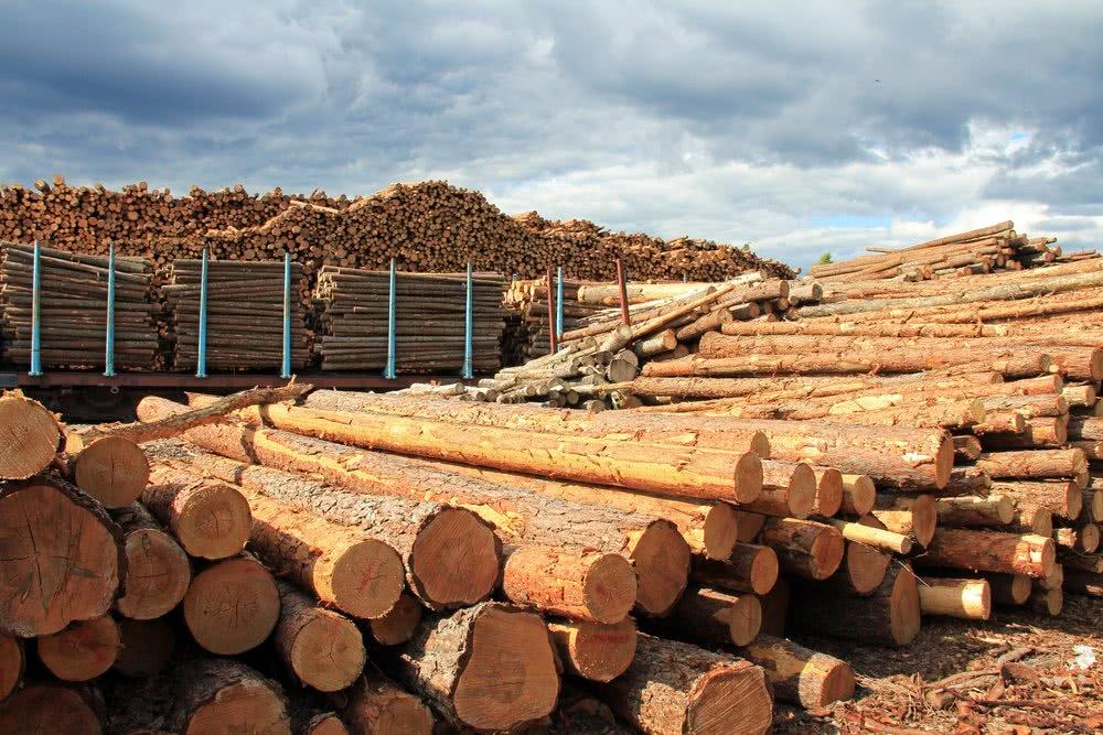 Sawmill company | manufacturer MDF - Rezult