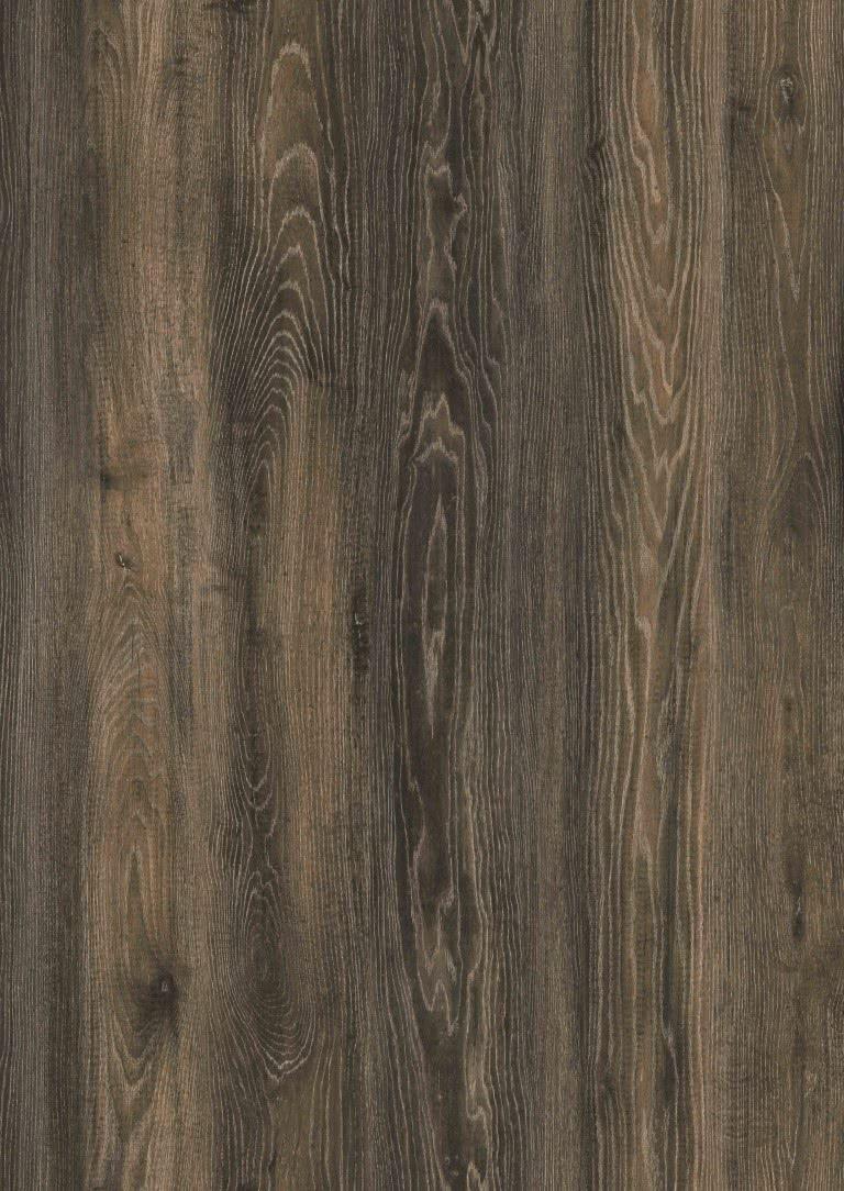 Canyon black oak (MD 199) Modern